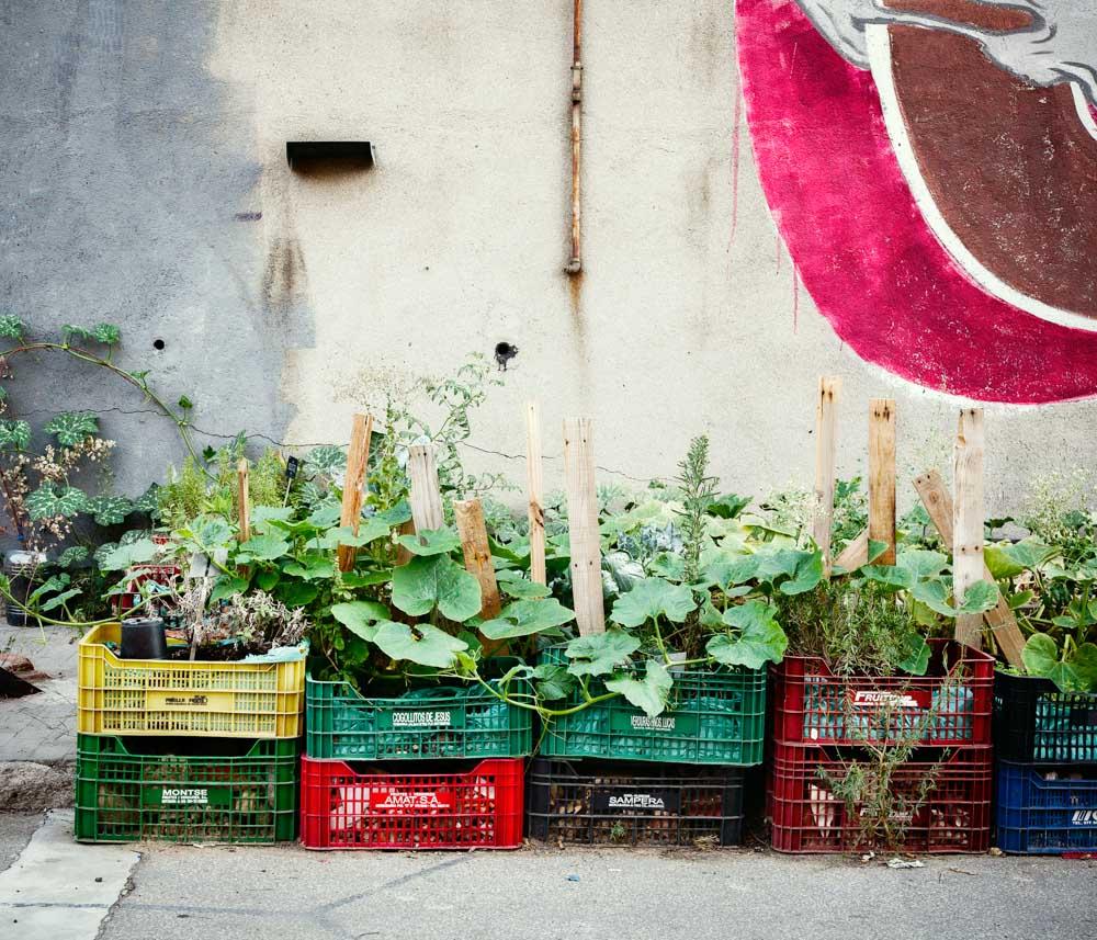 horticulturedcities-15