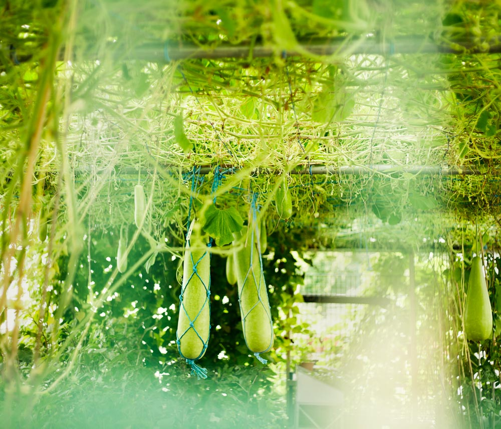 horticulturedcities-17