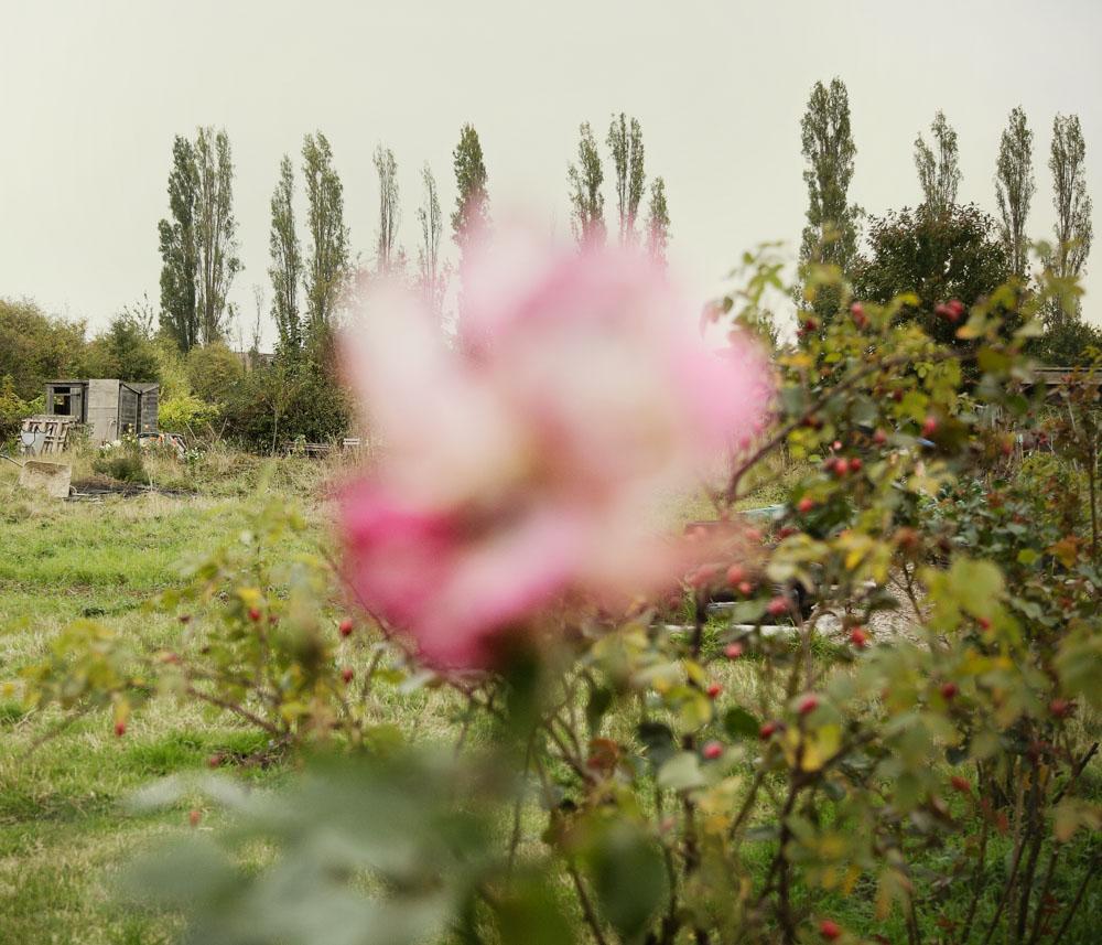 horticulturedcities-3